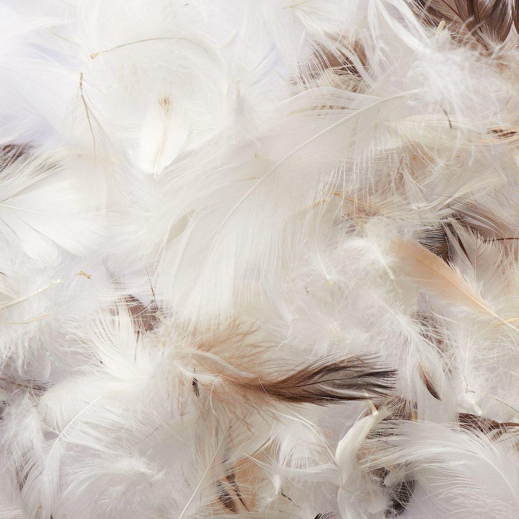 無印良品「羽根クッション」のレビュー:軽くへたりの少ない水鳥の羽根を使用