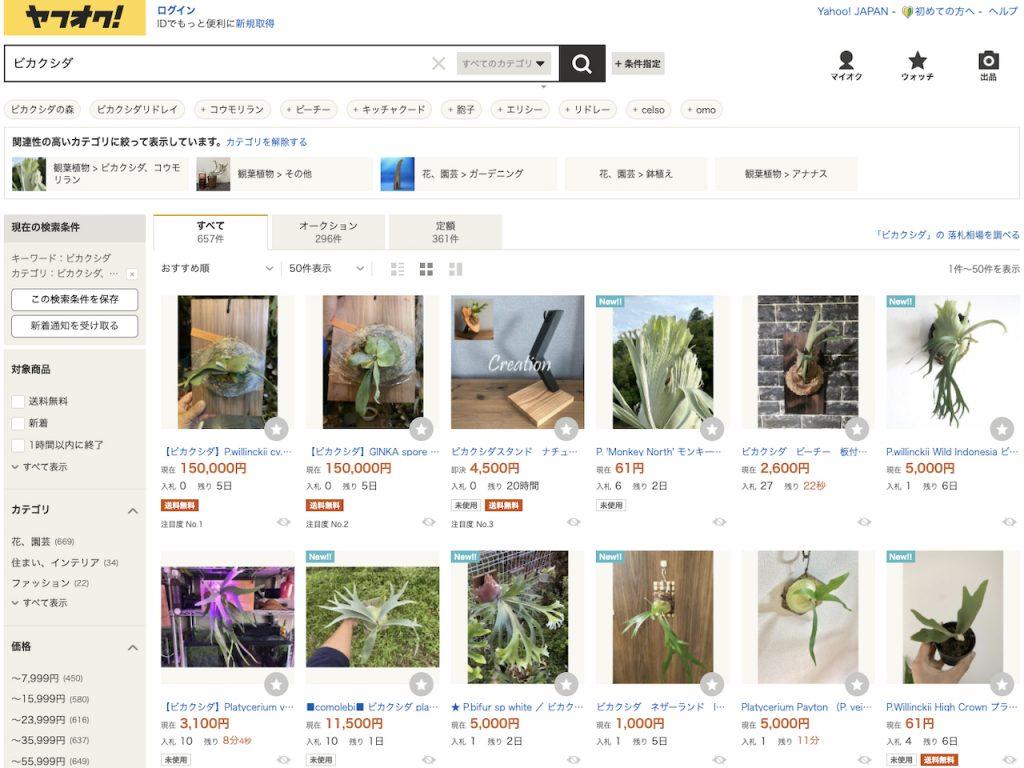 ビカクシダの買い方:ヤフオク:即決価格で一般的に流通しない原種や激レア品種まで揃う