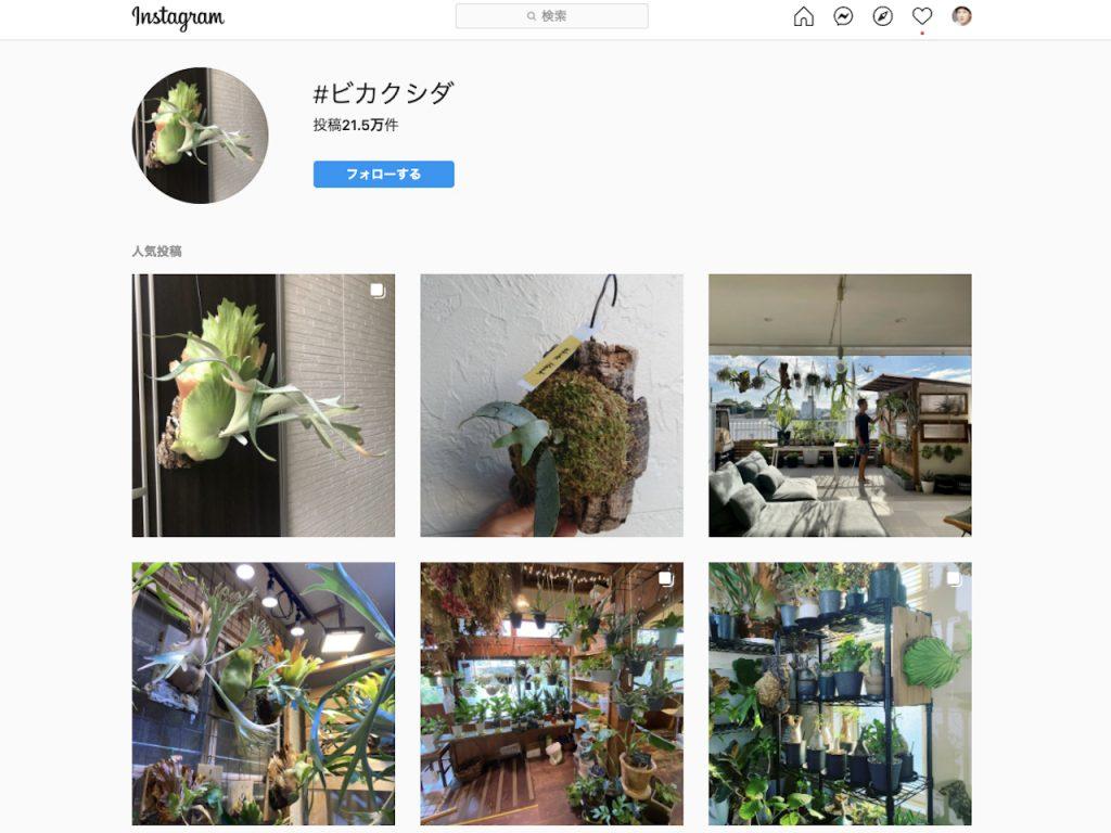 Instagram プロ・セミプロのオンライン即売会で超レア株が入手できる